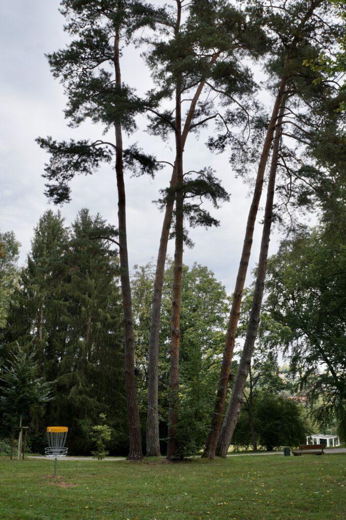Bahn 5 - Discgolf Nürtingen: Der Parcours im Galgenbergpark (Gallow Hill)